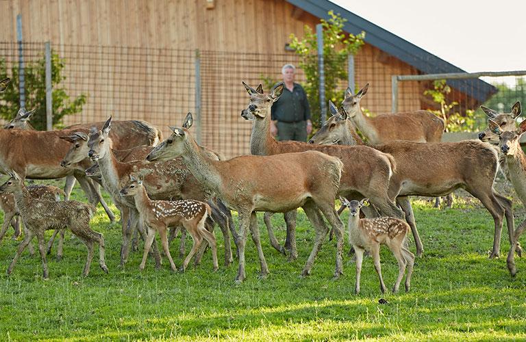 Tierärtzliche-Kontrollen-Wildzucht-Hirschzucht-Walter-Oitner-Salzburg-Oberösterreich-Rotwild-Haltung